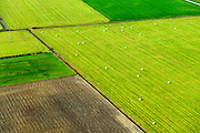 Nederland, Zeeland, Gemeente Borsele, 19-10-2014;  Zak van Zuid-Beveland, omgeving 's Gravenpolder. Kleinschalig landschap van binnendijken en kleine polders, 'oudland'. Akkers en grasland  met gekuild gras.<br /> Old Polders and grassland, Zealand, Southwest Netherlands.<br /> luchtfoto (toeslag op standard tarieven);<br /> aerial photo (additional fee required);<br /> copyright foto/photo Siebe Swart