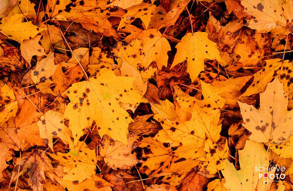 Falls leaves coat the ground.
