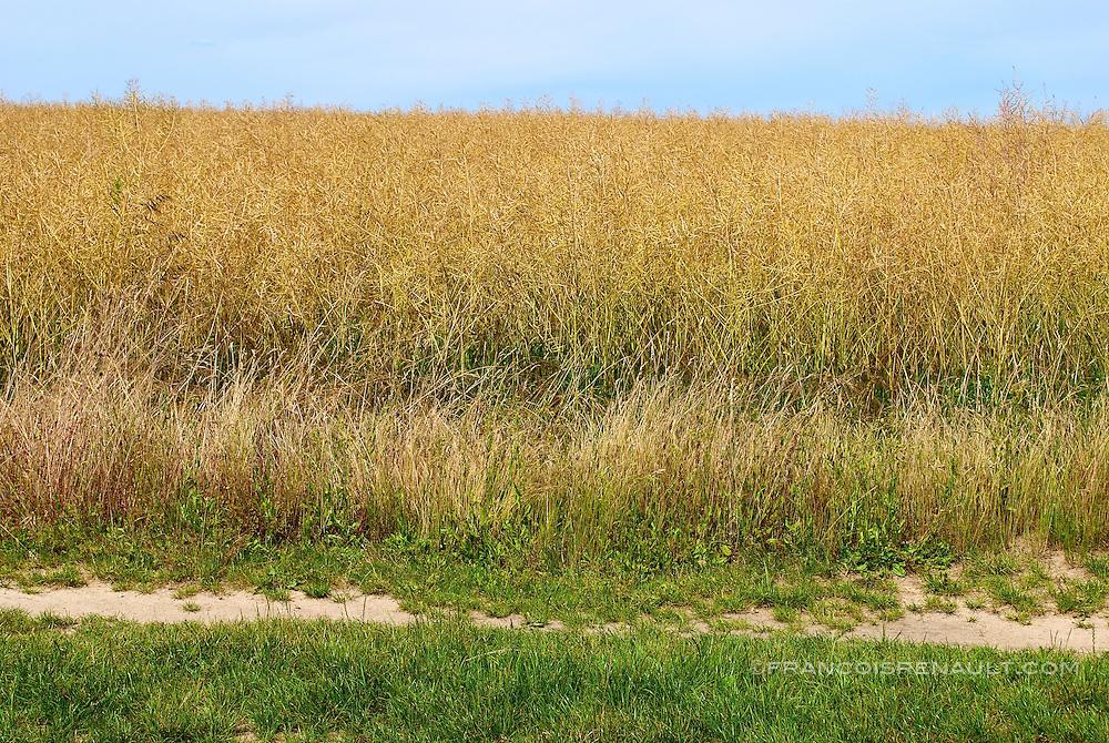 Paysages du Gâtinais, France.<br /> Ce parc situé au sud de l'Ile de France s'étend à travers les départements du Loiret, de la Seine et Marne, de l'Essonne et de l'Yonne.