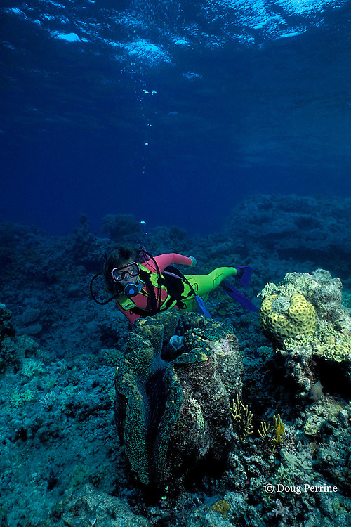 diver with giant clam, Tridacna gigas, Great Barrier Reef, Australia, ( Western Pacific Ocean ) MR 168