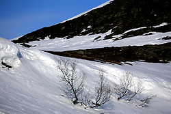 NORWAY HAMMERFEST 23MAR07 - Arctic landscape near  Hammerfest, the world's most northerly town...jre/Photo by Jiri Rezac..© Jiri Rezac 2007..Contact: +44 (0) 7050 110 417.Mobile:  +44 (0) 7801 337 683.Office:  +44 (0) 20 8968 9635..Email:   jiri@jirirezac.com.Web:    www.jirirezac.com..© All images Jiri Rezac 2007 - All rights reserved.