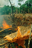Tropical nature: environmental issues, forest fire, logging, human activities, alternative energy
