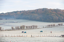 ©Licensed to London News Pictures 19/11/2019.<br /> Swanley,UK. Temperatures drop overnight making for a very cold and frosty Tuesday morning. Freezing cold weather conditions for these horses as they graze in a frozen field, Swanley, Kent. Photo credit: Grant Falvey/LNP