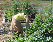 the Community Garden celebrates its first growing season in Oxford, Miss. on Monday, June 21 2010.