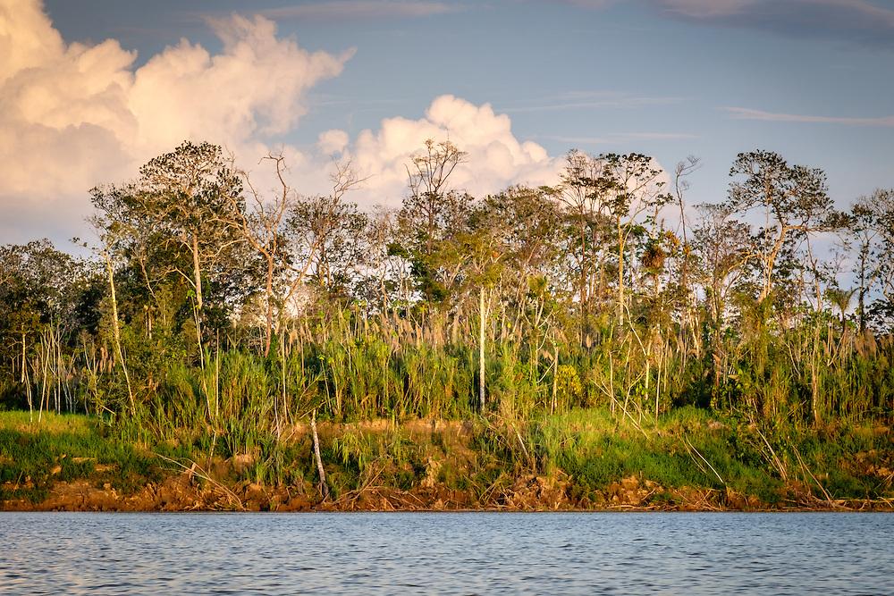 LORETO, PERU - CIRCA OCTOBER 2015:  View of the jungle from the Ucayali River in the Peruvian Amazon.