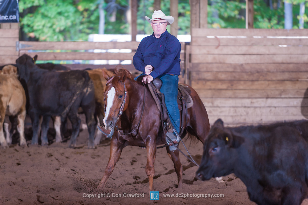 September 23, 2017 - Minshall Farm Cutting 5, held at Minshall Farms, Hillsburgh Ontario. The event was put on by the Ontario Cutting Horse Association. Riding in the $250 Novice Rider Class is Dean Mougenot on Stylish Baggins owned by Greg Wilde.