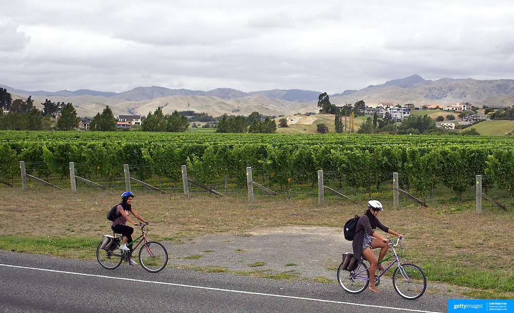 Cyclists make their way around the vineyards of the Marlborough Wine Region, with Wine Tours by Bike. Marlborough has over 40 wineries within a 10km radius of Blenheim. Marlborough, South Island, New Zealand...The Marlborough wine region is New Zealand's largest wine producer. The Marlborough wine region has earned a global reputation for viticultural excellence since the 1970s. It has an enviable international reputation for producing the best Sauvignon Blanc in the world. It also makes very good Chardonnay and Riesling and is fast developing a reputation for high quality Pinot Noir. Of the region's ten thousand hectares of grapes (almost half the national crop) one third are planted in Sauvignon Blanc. Marlborough, New Zealand, 11th February 2011. Photo Tim Clayton