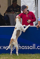 """AUTUMN KELLY WITH GUNDOGS.It was an emotional day for Zara, who fought back tears during her farewell to her favourite horse """"Ginger"""" Toytown, Gatcombe Estate, Minchinhampton, Gloucestershire_07/08/2011.Mandatory Credit Photo: ©Dias/NEWSPIX INTERNATIONAL..**ALL FEES PAYABLE TO: """"NEWSPIX INTERNATIONAL""""**..IMMEDIATE CONFIRMATION OF USAGE REQUIRED:.Newspix International, 31 Chinnery Hill, Bishop's Stortford, ENGLAND CM23 3PS.Tel:+441279 324672  ; Fax: +441279656877.Mobile:  07775681153.e-mail: info@newspixinternational.co.uk"""