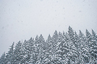 Snow falling over snow covered trees in the Central Cascades of Washingtn State.