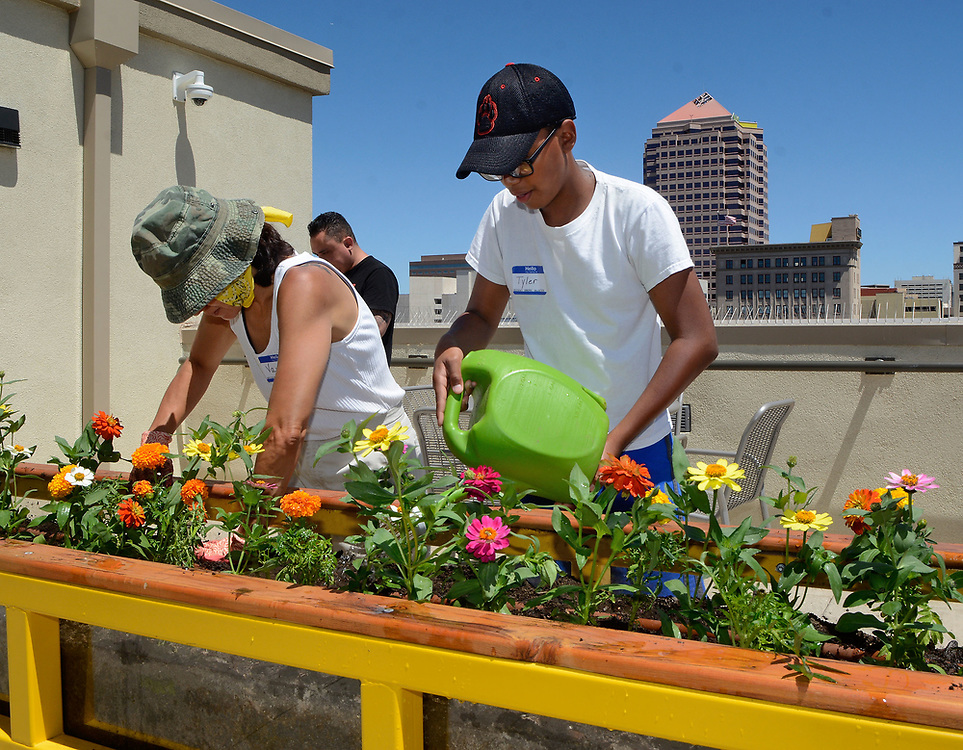 jt061317c/a sec/jim thompson/ left  to right Vanessa and Tyler  Sanchez plant son flowers in one of the gardens on  the roof top gardens on the roof of the Imperial Building in downtown Albuquerque. Tuesday June. 13, 2017. (Jim Thompson/Albuquerque Journal)