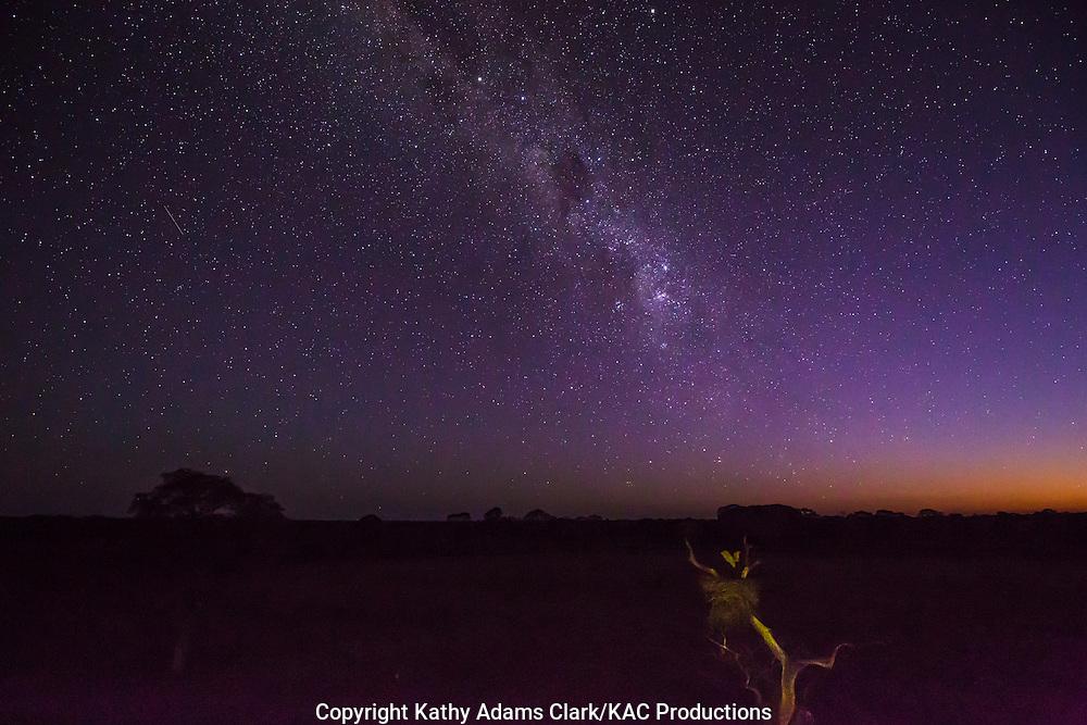 Milky Way, Brazil; Mato Grosso; Milky Way; Pantanal