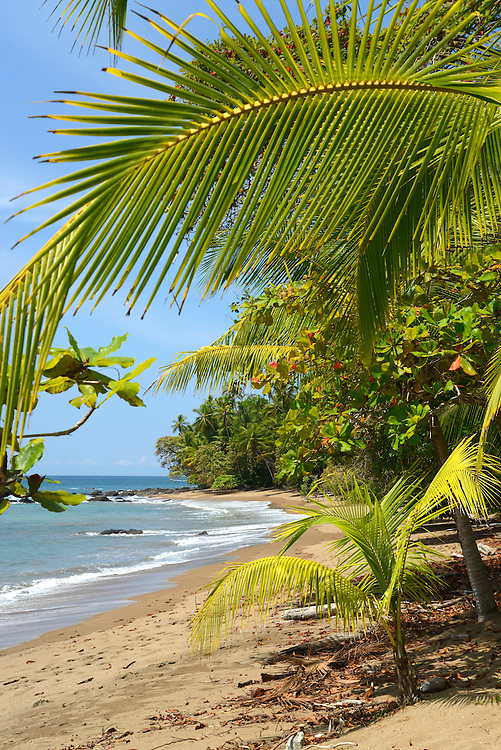Pacific coast,Corcovado National Park,Osa Peninsula,Costa Rica,Central America