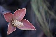 Nova Lima_MG, Brasil.<br /> <br /> Estacao Ecologica de Fechos em Nova Lima, Minas Gerais. Na foto detalhe de uma planta.<br /> <br /> Fechos Ecological Station in Nova Lima, Minas Gerais. In this photo a plant detail.<br /> <br /> Foto: JOAO MARCOS ROSA / NITRO