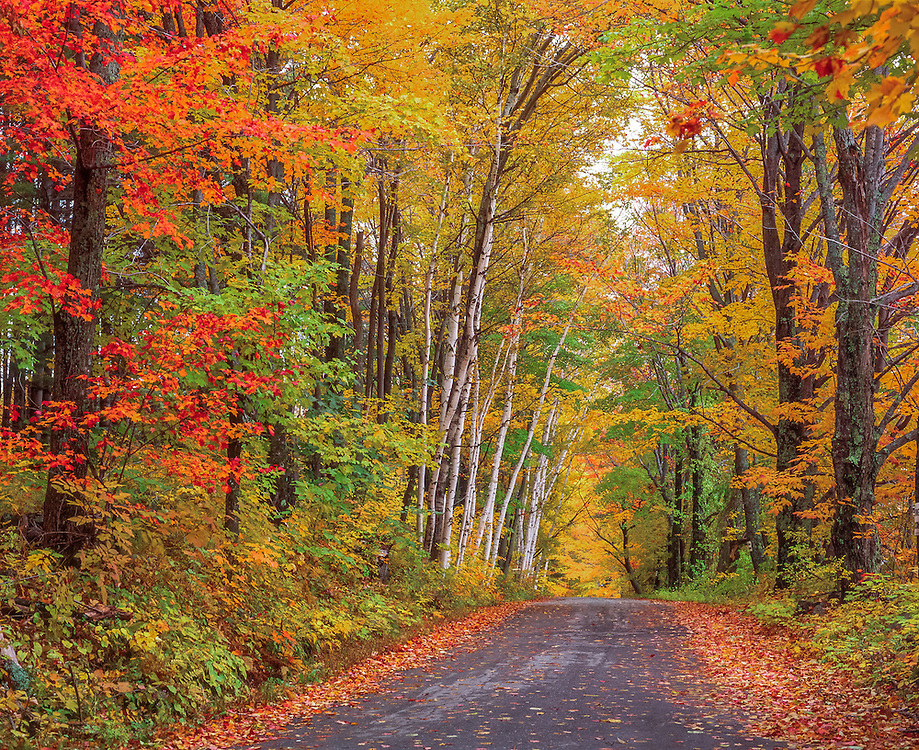 Country road, Lovers Lane, fall colors with leaves on ground, Sugar Hill, NH