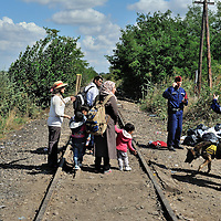 Hungarian police with dogs are standing just inside the Hungarian border from Serbia, by an old railway line which runs through a gap in the border fence, which is currently being reinforced. The railway line is being used by refugees and migrants to pass into Hungary, as here. They are being stopped a kilometer down the line by police, and being held in a field close to the town of Röszke.  The official border reception centres are full and refugees must camp on the ground, dependent on food donated by volunteer groups