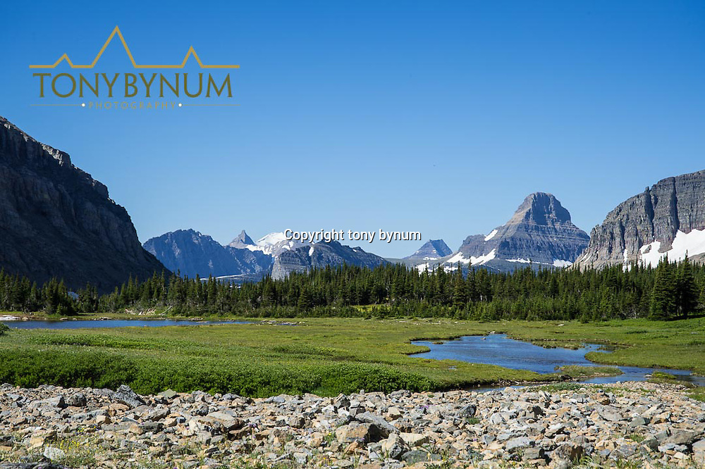 alpine meadow preston park glacier national park