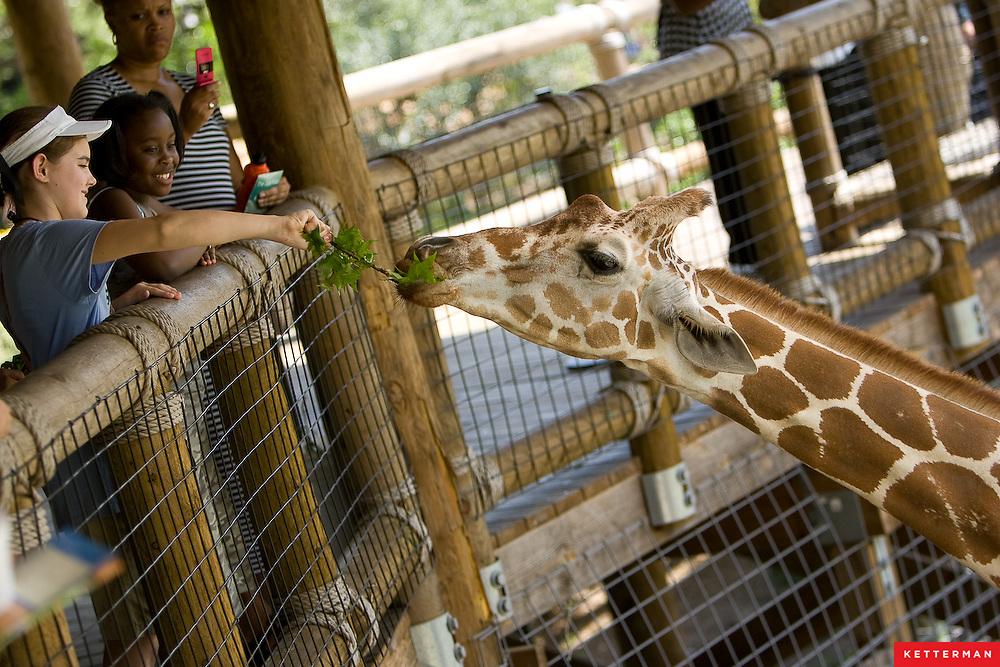 Kids feed a giraffe at the Jacksonville Zoo in Florida.