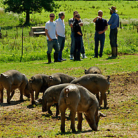 Amish Berkshire Pig Farm Dixon MO