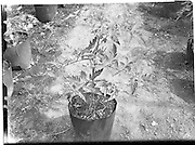 31/05/1960<br />