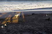 A pack of dogs at Echo Beach, Canggu.
