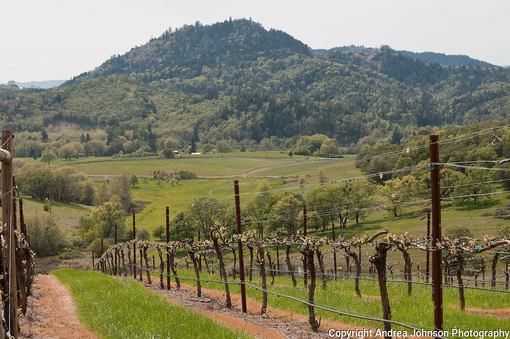 Abacela Winery estate vineyard, Umpua Valley, Southern Oregon