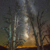 Milky Way and bare trees in the White Mountains of California.