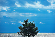 Tree and clouds on The North Channel on Lake Huron<br /> Blind River<br /> Ontario<br /> Canada