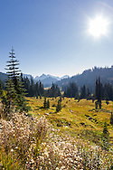 Fall foliage in Mount Rainier National Park's Paradise Valley.  The Tatoosh Range is in the background - most notable Lane Peak.