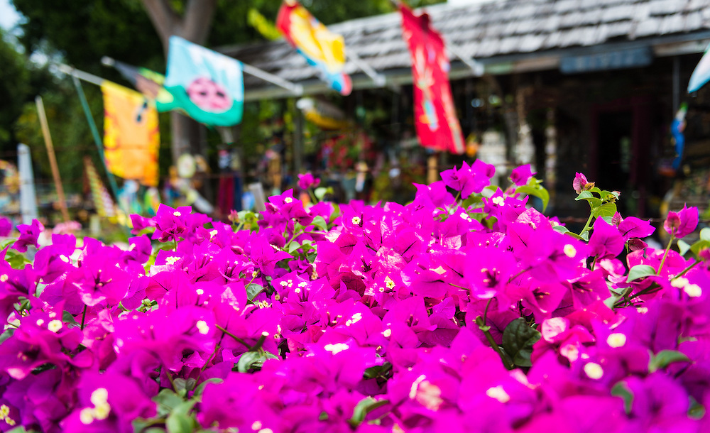 View of tropical flowers in a gift shop in the Florida Keys