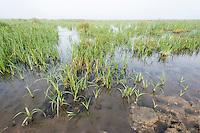 Limpopo floodplain, Maputo Province, Mozambique