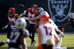 OAKLAND, CA - NOVEMBER 17: Quarterback Ryan Finley #5 of the Cincinnati Bengals fumbles while being sacked by defensive end Maxx Crosby #98 of the Oakland Raiders during the first quarter at RingCentral Coliseum on November 17, 2019 in Oakland, California. The Oakland Raiders defeated the Cincinnati Bengals 17-10. (Photo by Jason O. Watson/Getty Images) *** Local Caption *** Ryan Finley; Maxx Crosby