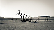 Black and white image of backlighted trees during Namibian sunset in Deadvlei.