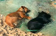 PRT, Portugal: Streunender Hund, Haushund (Canis lupus familiaris), ein Paar liegt auf einem alten Fischernetz am Strand, schlafen, Quarteira, Algarve | PRT, Portugal: Stray dog, domestic dog (Canis lupus familiaris), couple laying on an old fishnet at the beach, sleeping, Quarteira, Algarve |