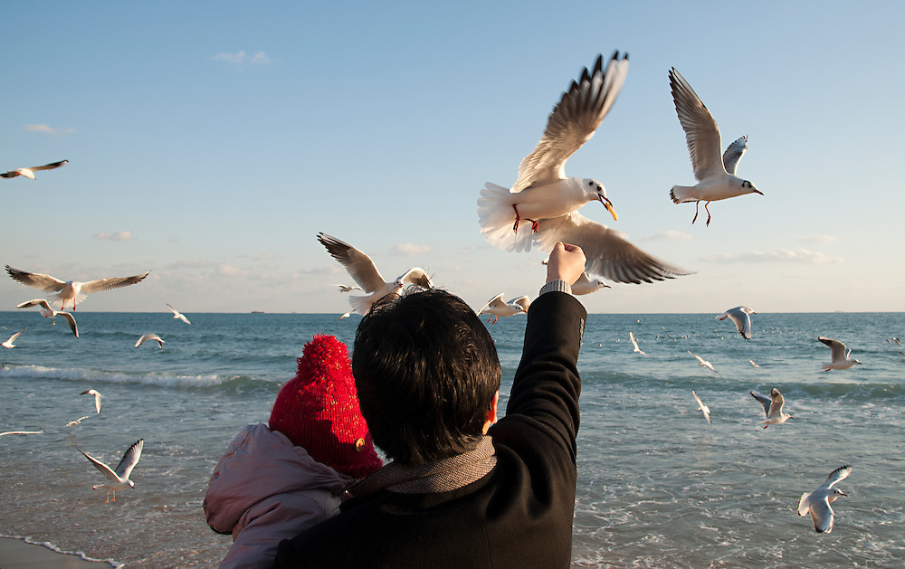 Seagulls flock on Haeundae Beach, Busan, South Korea, December 31, 2012.