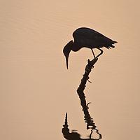 Wading Birds Portfolio