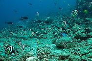 Schools of Fish, Fish Rain, Molokai Hawaii