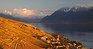 Late day light on the village of Villette and the golden colored vineyards of the Lavaux wine region on the shores of Lake Geneva, Switzerland. http://www.gettyimages.com/detail/photo/lavaux-vineyards-villette-switzerland-high-res-stock-photography/484073291
