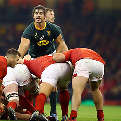 CARDIFF, WALES - NOVEMBER 24: Eben Etzebeth of South Africa during the Castle Lager Outgoing Tour match between Wales and South Africa at Principality Stadium on November 24, 2018 in Cardiff, Wales. (Photo by Steve Haag/Gallo Images)