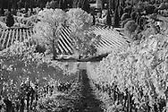 Infra Red Black & White view of vineyards, near Montalcino, Italy, Tuscany