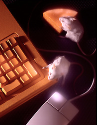 three 3 blind mice including compouter mouse