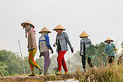 My An Hung, Farming village, Mekong River, Vietnam, Asia