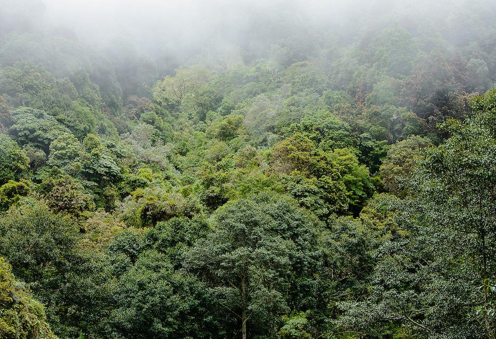 rainforest shrouded in cloud along Cerro de la Muerte, Costa Rica