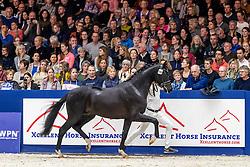 394, My Romance VRB<br /> KWPN hengstenkeuring - 's Hertogenbosch 2020<br /> © Hippo Foto - Dirk Caremans<br /> 31/01/2020