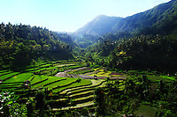 Terraces of rice fields at Bernina, East Bali, Indonesia.