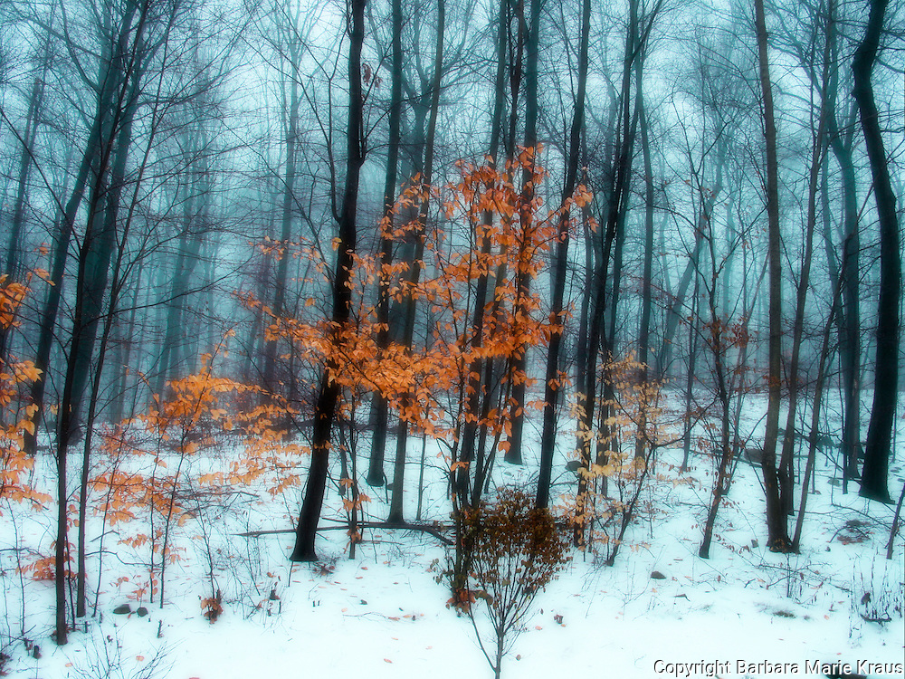 Winter tree abstracts