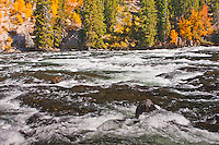 LeHardys Rapids on the Yellowstone River.  Yellowstone National Park, Wyoming, USA.