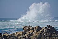 20 foot fall swell off Asilomar on the Monterey Peninsula.