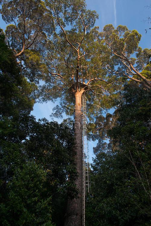 Viewing platform in a tree, Maliau Basin, Sabah, Malaysia, Borneo,