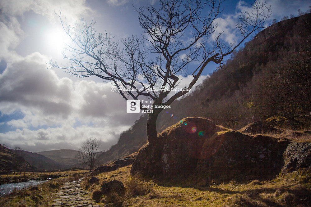 A tree on the walkway in Watendlath Valley, Keswick, Lake District, England. Taken on an early spring day.