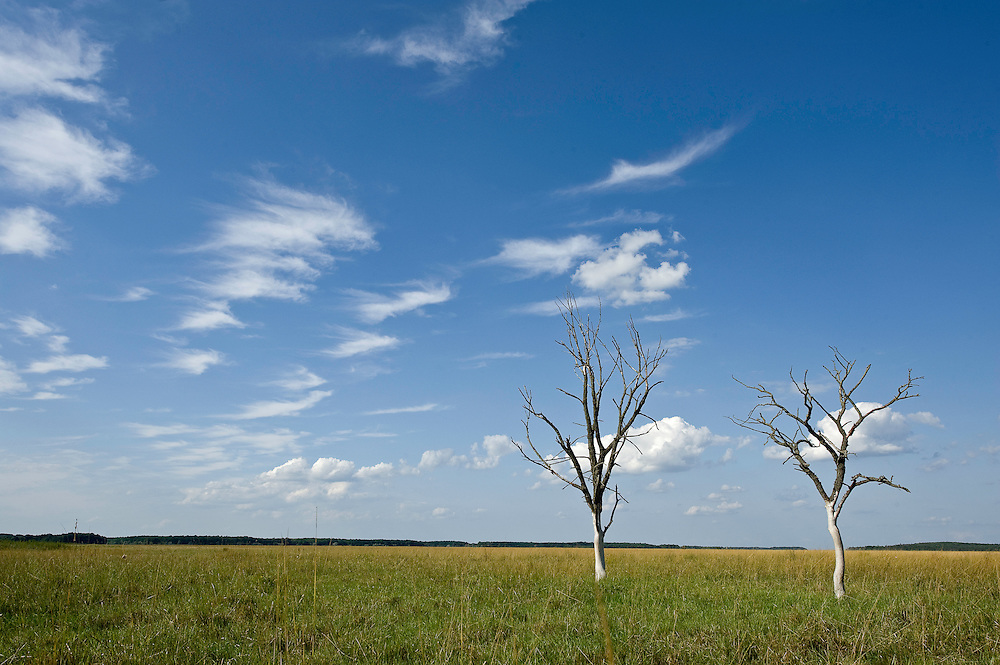 Arid trees on Hortobagy landscape, Hortobagy National Park, Hungary